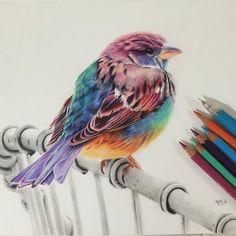 Bird color pencil drawing by karenhullart http://webneel.com/25-beautiful-color-pencil-drawings-valentina-zou-and-drawing-tips-beginners | Design Inspiration http://webneel.com | Follow us www.pinterest.com/webneel