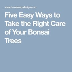 Five Easy Ways to Take the Right Care of Your Bonsai Trees