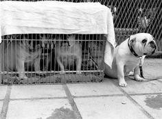 DOG'S número 4 ©gloriagiménez