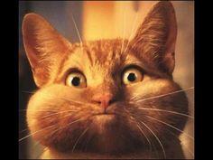 Funny cats vine compilation 2014 - part 9 - Super! =)