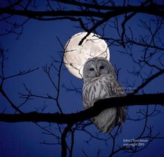 Can't beat an owl in the moon light