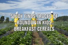 A new study has found traces of the glyphosate weedkiller Roundup in dozens of children's breakfast cereals, including Quaker Oats and Cheerios. Breakfast Cereal, Breakfast For Kids, Product Liability, Study, Children, Young Children, Studio, Boys, Kids