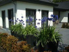 Strakke moderne bloempotten  met losgroeiende beplanting. Een mooi combinatie!