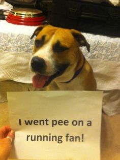 """I went pee on a running fan."" ~ Dog Shaming No Shame in My Game!! (is it me or is he laughing?!) The best of dog shaming - Part 6 -"