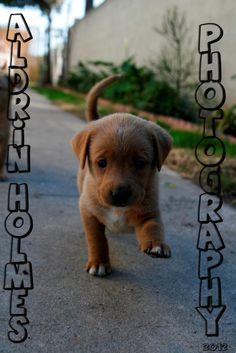 A Cute Lil Stray Dog :)