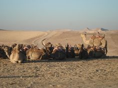 Saladin himself, having only just escaped the battlefield unscathed, barely evaded the Bedouin's clutches. He made it back to Egypt on a camel, with just a small group of retainers.