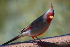http://saraalgoe.hubpages.com/hub/Most-beautiful-birds-in-the-world