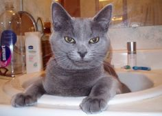 content cat in a sink