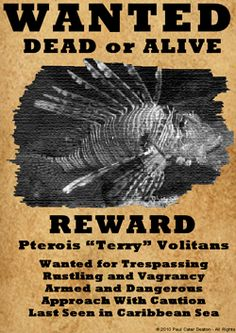 kill the lionfish - Google Search