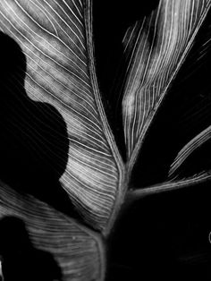 Art, Photography, Black and white, Leaf, High Contrast- A New Leaf on Etsy, $25.00