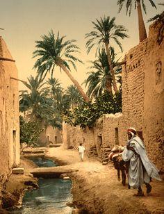 Palmiers-dattiers dans l'oasis de Biskra en Algerie en 1905 © Library of Congress