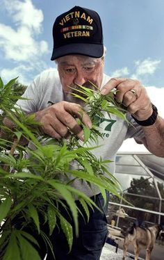 Medical Marijuana Battle Coming to Florida | As Florida baby boomers who may have used marijuana in their youth feel the impact of age, they may add to the push for legalization.
