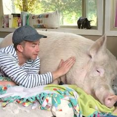 These guys thought they were adopting a micro pig, but now Esther is 650lbs