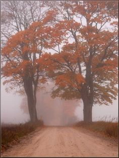 I think this is so cool. There is just something about fog.
