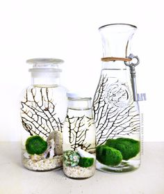Choose your set of aquatic terrariums (aquariums)! Fuzzy marimo moss balls float amongst an intricate backdrop of webbed black sea fans and real sea Más