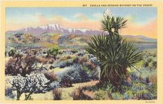 Vintage Southwest Postcard  Cholla and Spanish by VintagePlum, $4.00