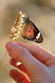 Nature in my hands web   Out taking photo' of butterflies re…   Flickr