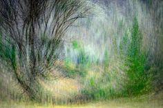 Spring Dance by Ursula Abresch on 500px