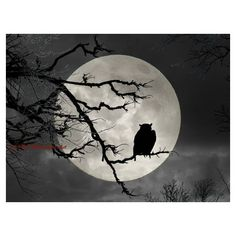 Surreal Owl Silhouette Against Full Moon Matted Picture Art Print... (£11) ❤ liked on Polyvore featuring home, home decor, wall art, photo picture, teal home decor, silhouette wall art, bird silhouette wall art and black and white photography wall art