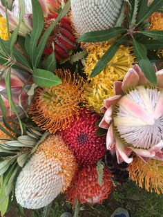 Banksia protea, King protea, Pin Cushion protea.