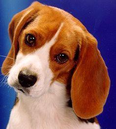 Giani - beautiful little rescue pup.