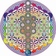 Tree of life, flashing rainbow seed of life, fruit of life and flower of life- subtle energy mandala- Mandalas Painting, Mandalas Drawing, Chakras, Flower Of Life Symbol, Life Flower, Rose Croix, Yoga Studio Design, Seed Of Life, Crystal Grid