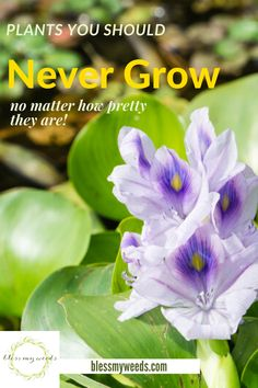 Never is a harsh word, but it is so true when it come to these plants. Believe it or not, there are some plants you should never grow. We are sharing a list of 10 of them to ALWAYS avoid. #plantsyoushouldnevergrow #avoidgrowingtheseplants #planttips #gardeningtips #beesandrosesblog Farmhouse Landscaping, Front Yard Landscaping, Gardening For Beginners, Gardening Tips, Outdoor Plants, Outdoor Gardens, Propagating Hydrangeas, Diy Projects On A Budget, Landscape Curbing