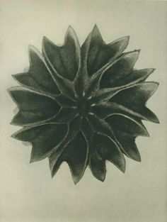 Photography: Soulcatcher Studio: Karl Blossfeldt
