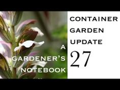 Container Garden Update 27: Potting up Epiphyllum and scented geranium cuttings | A Gardener's Notebook with Douglas E. Welch
