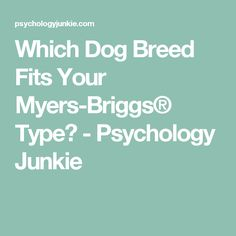 Which Dog Breed Fits Your Myers-Briggs® Type? - Psychology Junkie