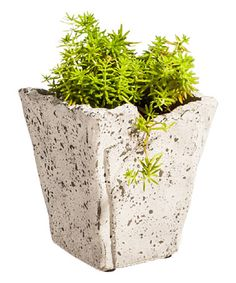 This Stone Finish Ceramic Planter is perfect! #zulilyfinds