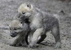 Berlin Zoo stubbornly persists in maintaining what we believe to be the world's most adorable collection of baby animals.