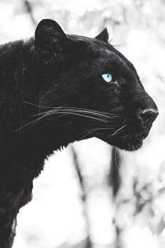 Black Panther                                                                                                                                                                                 More