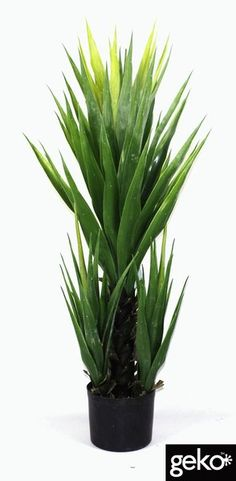 this plant is tall and is suited for indoor or artificial xlarge yukka size of plant extra large any artificial plants used outdoors should be as