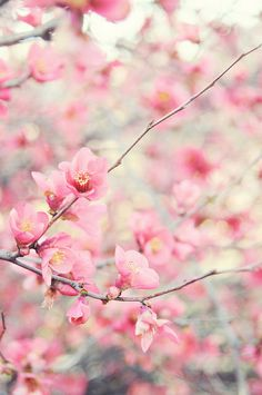~the cherry blossoms-sakura Pretty In Pink, Beautiful Flowers, Beautiful Boys, Foto Poster, Spring Blossom, Belle Photo, Pretty Pictures, Mother Nature, Photos
