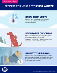 7998904e6eb You can bundle up for the colder months. A little preparation goes a long  way to help your dog or cat have a safe and fun winter.