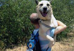 11 perros que han decidido que prefieren no hacer ejercicio - ¡A los perros les encanta estar activos y salir a la naturaleza! O eso era lo que pensábamos. Pero estos 11 perros te mostraran que para algunos, lo mejor es simplemente no salir de casa. 1. El pequeño Pug se ve más feliz que su dueño, después de todoél no tiene que caminar.  2. Mientras tanto, ... #animales, #vive=Personas,animales,lavidaytodossussecuaces.  http://www.vivavive.com/11-perros-que-han-dec