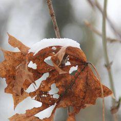 """#winter #winterwonderland #auenwald #leipzig #wintertime #winter2016 #winterwald #wald"""