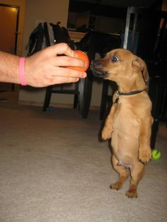 Meet Cooper: The dog that really loves his orange ball