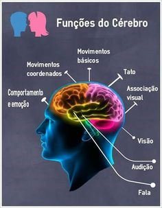 funções do cérebro Medicine Student, Brain Tricks, Brain Gym, Med Student, Science Biology, Anatomy And Physiology, Human Anatomy, Neuroscience, Psychology