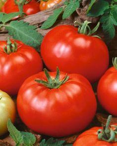25+ Delicious Tomato Seeds, $0.99