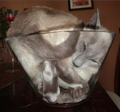 Funny Animal Pictures - View our collection of cute and funny pet videos and pics. New funny animal pictures and videos submitted daily. I Love Cats, Cute Cats, Funny Cats, Funny Animals, Cute Animals, Crazy Cat Lady, Crazy Cats, Funny Animal Pictures, Funny Photos