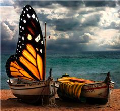 Monarch sail