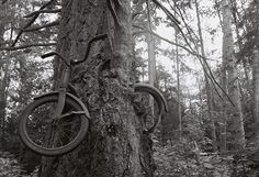 In 1914, a young man leaned his bicycle against a tree, left Vashon Island, Washington, and went off to war, never to return. The tree did what trees do, and two became as one. So goes the legend of Vashon's infamous tree bike — a poignant, romantic, tragic story.