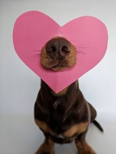 💗for Saby for V day for Logan to try Animals And Pets, Baby Animals, Funny Animals, Cute Animals, I Love Dogs, Cute Dogs, Weenie Dogs, Doggies, Dog Rules
