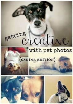 10 Tips for Creative and Clever Pet Photos: Canine Edition