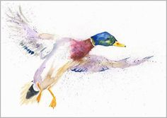 Gorgeous contemporary wildlife fine art prints and original watercolour paintings by artist Helen April Rose Watercolor Animals, Watercolor Paper, Watercolour Paintings, Watercolours, Wildlife Paintings, Wildlife Art, Duck Tattoos, Antique Paint, Mallard