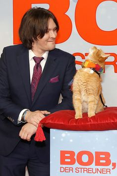 James Bowen and Bob the Cat attend the 'Bob der Streuner' Special Screening in Berlin at Kino in der Kulturbrauerei on December 6 2016 in Berlin. Crazy Cat Lady, Crazy Cats, I Love Cats, Cool Cats, A Cat Named Bob, Kittens Cutest, Cats And Kittens, Animals Beautiful, Beautiful Cats