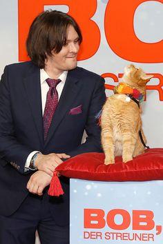 James Bowen and Bob the Cat attend the 'Bob der Streuner' Special Screening in Berlin at Kino in der Kulturbrauerei on December 6 2016 in Berlin...