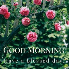 Share these good morning quotes and tell your friends it's always a good time for humor; Good Morning Tuesday, Good Morning Funny, Good Morning Friends, Good Morning Good Night, Good Morning Wishes, Good Morning Quotes, Night Quotes, Morning Line, Morning Morning